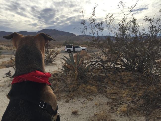 Doggo surveys lanscape.