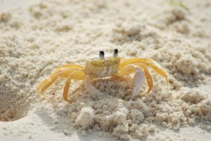 Some creatures love Low tide.