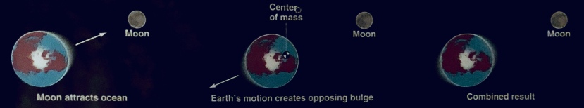 Moon's gravity and Earth's inertia create two tidal bulges (waves) on opposite sides of the planet.
