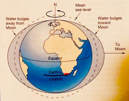 Moon and Sun create tidal bulges and Earth rotates beneath them.